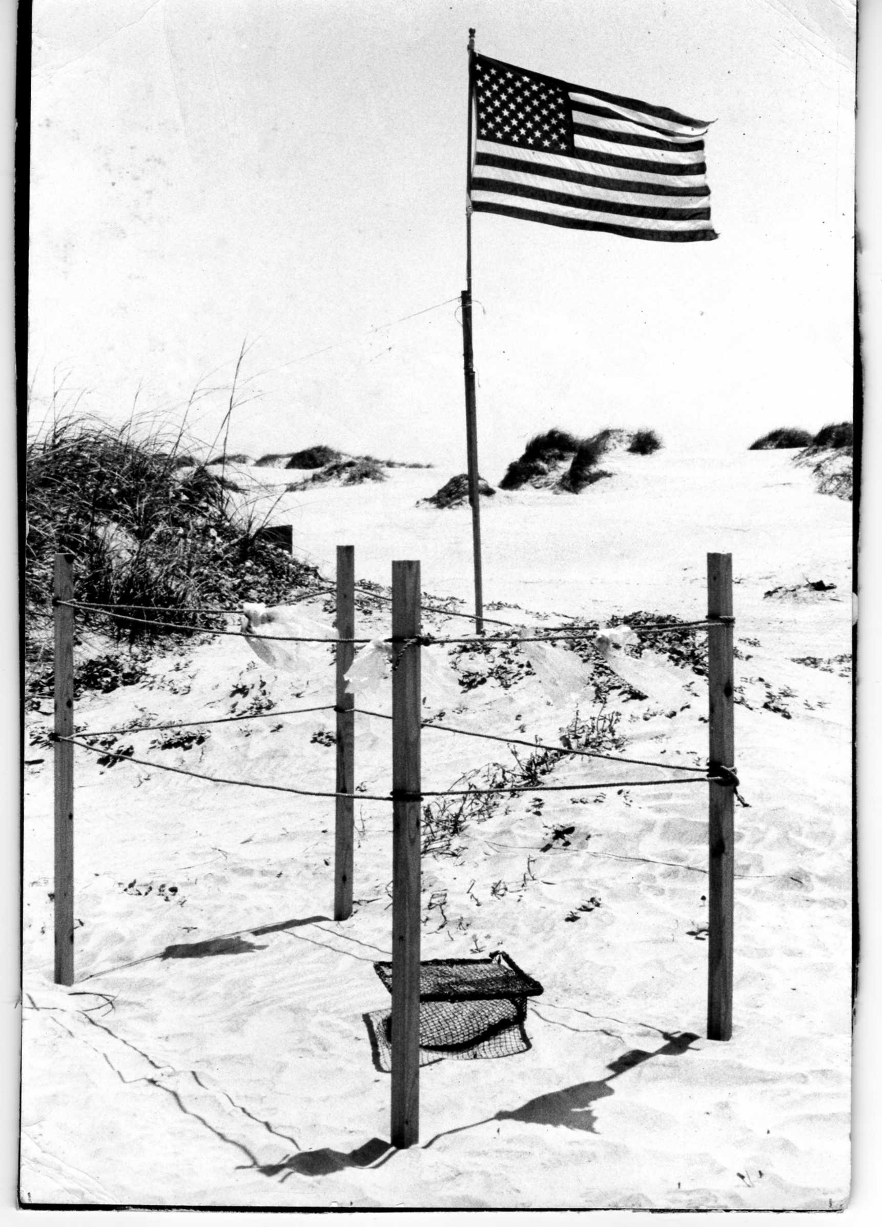 Sea turtle nests at Rancho Nuevo in the 1960s